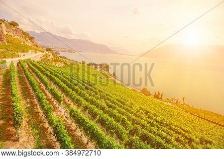 Scenic Landscape Of Lavaux Vineyard Terraces At Sunset And Lake Geneva Or Lake Leman. Lavaux, A Unes