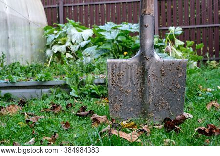 A Metal Garden Shovel With A Wooden Handle Is Covered With Dried Soil And Stuck In The Ground Among