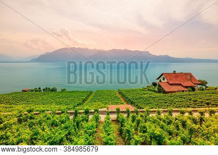 Lavaux Vineyard, A Unesco World Heritage Site. View At Sunset On Terraced Vineyards, Swiss Alps And