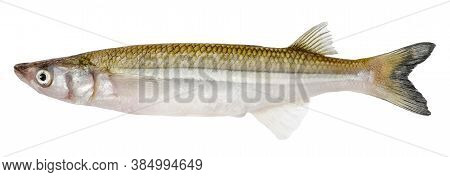 Alive Smelt Fish Isolated On White Background