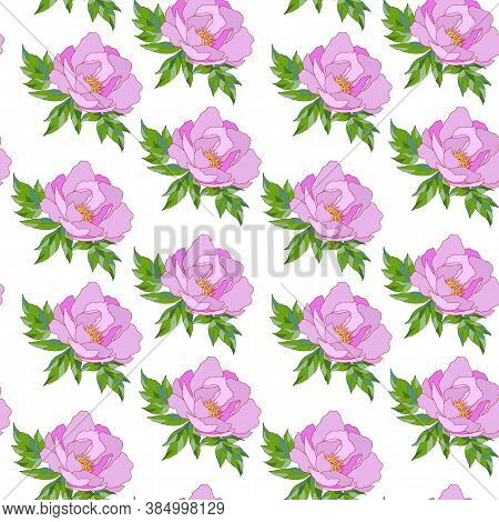 Seamless Pattern With Colors Of Pions, Ornament For Wallpaper And Fabric, Wrapper, Scrapbooking Pape