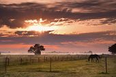 horse silhouette on morning misty pasture in Netherlands poster