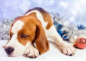 The sad hound and brilliant Christmas ornaments poster