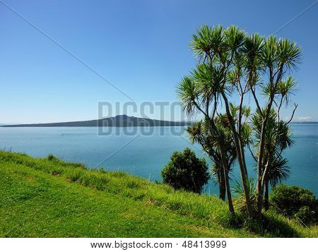 Cabbage palm tree in front of a seaview