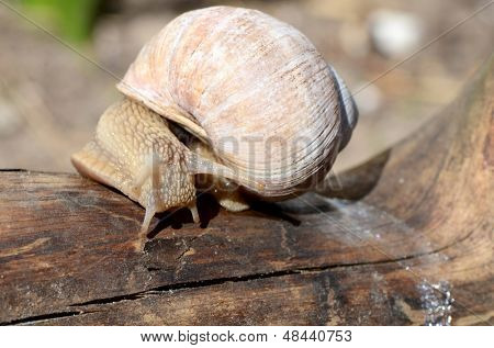 The snail creeps on a tree
