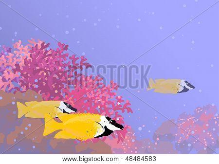 Three Foxface Rabbitfish Among The Corals
