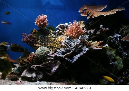 Coral Reefs are aragonite structures produced by living organisms found in marine waters with little to no nutrients in the water. High nutrient levels such as those found in runoff from agricultural areas can harm the reef by encouraging the growth of al poster