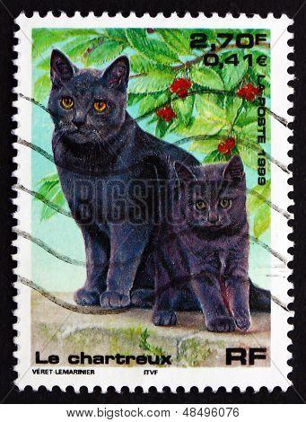Postage Stamp France 1999 Chartreux Cat, Pet