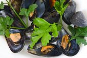 Boiled mussel with parsley oil and lemon and garlic poster