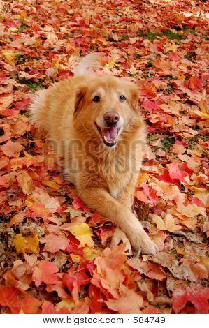 AutumnBuddyS