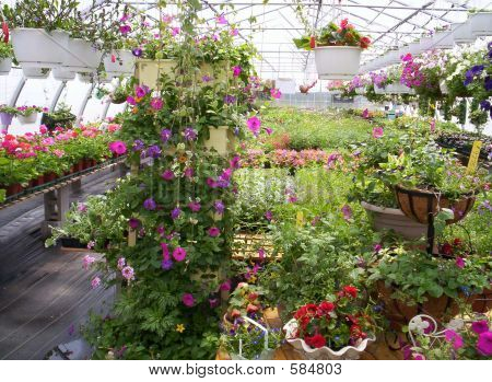 greenhouse plants and flowers Indian Garden farm Bridgewater Lunenburg County Nova Scotia poster