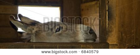 Nice and curious donkey in an american farm poster