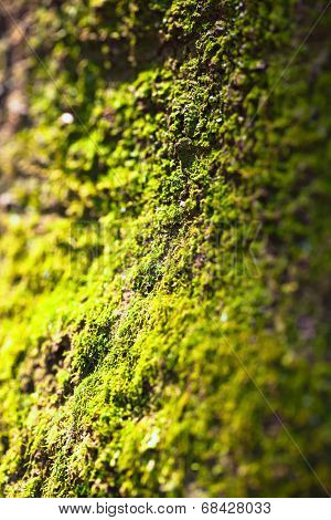 Green moss texture and shadow