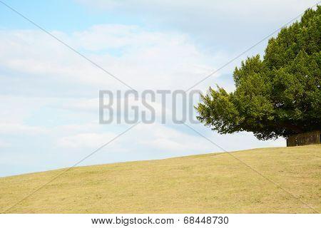 Tree Frames The Sky On An Empty Hill