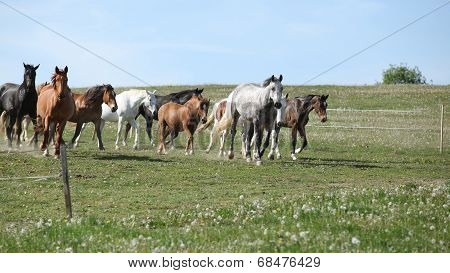 Very various barch of horses running together on pasturage poster
