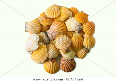 Set Of Seashell Isolated On White Background