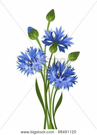 Bouquet of blue cornflowers. Vector illustration.