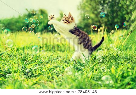 Kitten Playing With Soap Bubbles Outdoor