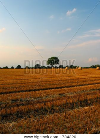 Beautiful crop-field (middled)