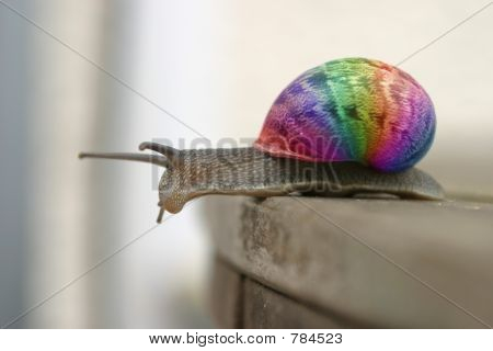 wow snail