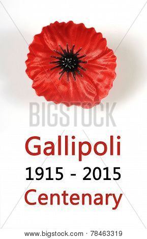 Australian Gallipoli Centenary, Wwi, April 1915, Tribute With Red Poppy Lapel Pin Badge On White Bac