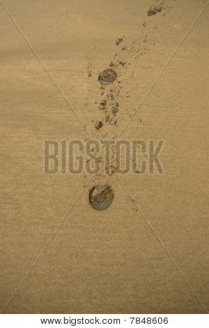 Ballybunion Beach Sand Hoofprints