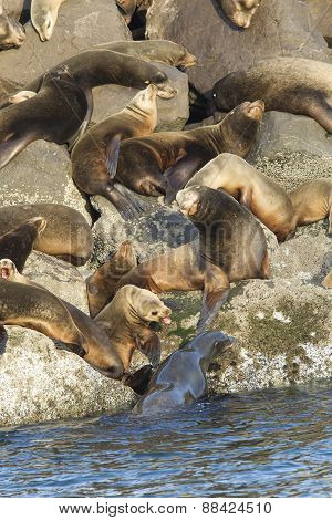 Sea lions guarding their spots.