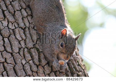 Squirrel Break