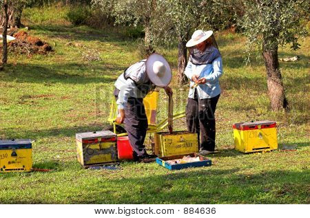 Bee Boxes And  Bee Keepers 5