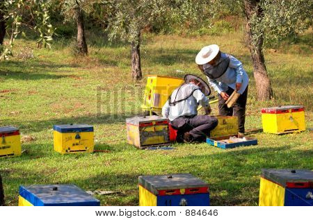 Bee Boxes And  Bee Keepers 6