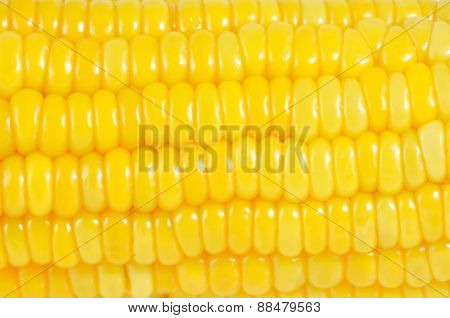 Close up sweet corn natural texture and pattern