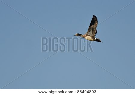 Lone American Wigeon Flying In A Blue Sky