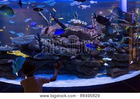Young man looking at fish in a darkest tank at the aquarium