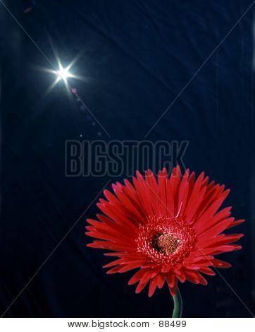 Daisy Under Sun