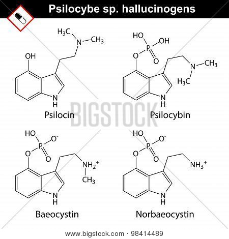 Natural Tryptamine Psilocybe Sp. Alkaloids