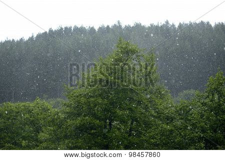 Hail storm flattens the forest with ice chunks the size of golf balls