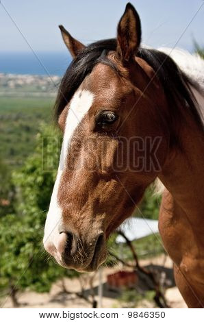 Spanish paint horse