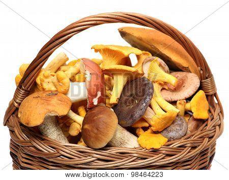 Basket of wild mushrooms isolated on white background.