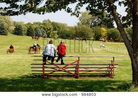 Horseshow024