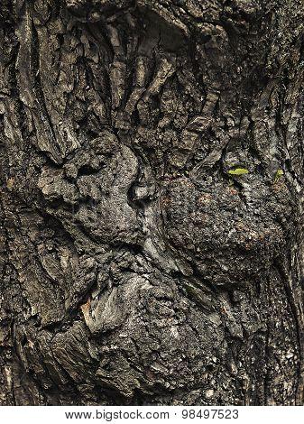 Grunge Texture Burls Tree Bark Closeup