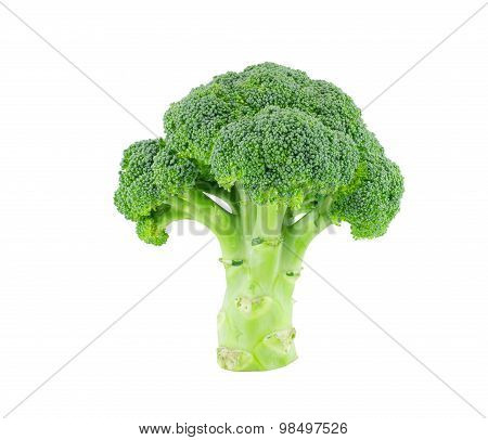 Broccoli isolate on white with clipping path