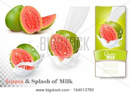 Guava in a milk splash and label on a transparent background. Vector.