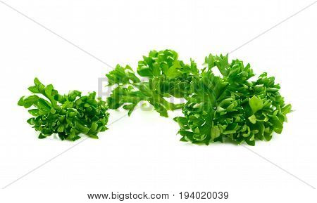 Parsley on a white background.green leaves of parsley isolated on white background