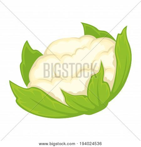 Vector illustration of cauliflower head with leaves isolated on white.