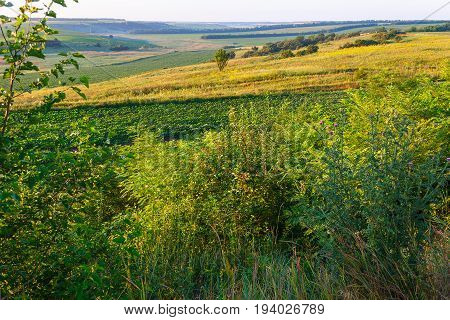 July morning on a hill bright beams of the sun have lit herbs and hills with agricultural fields of Kuban. Krasnodar Krai.