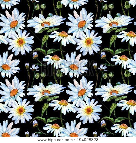 Wildflower daisy flower in pattern a watercolor style. Full name of the plant: daisy. Aquarelle wild flower for background, texture, wrapper pattern, frame or border.