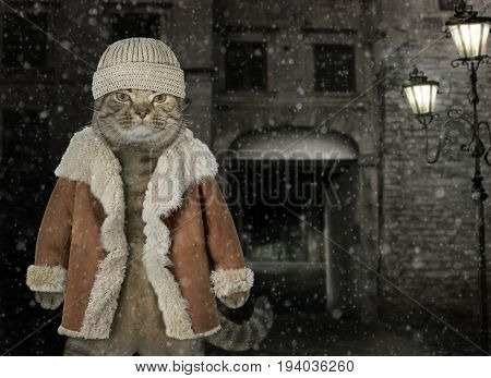 The cat on a night street wears a hat and a winter coat.