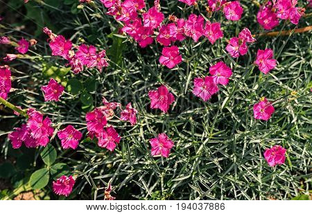 Background Of Fresh Green Leaves And Small Pink Flowers. Green Background With Leaves And Pink Flowe