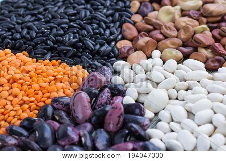 Yellow Lentils, White, Purple, Brown Kidney Beans Close-up