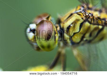 Dragonfly Eyes. Macro Photography.